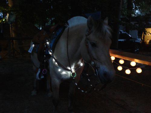 http://strandschaf.de/images/pony/moonlight1.jpg